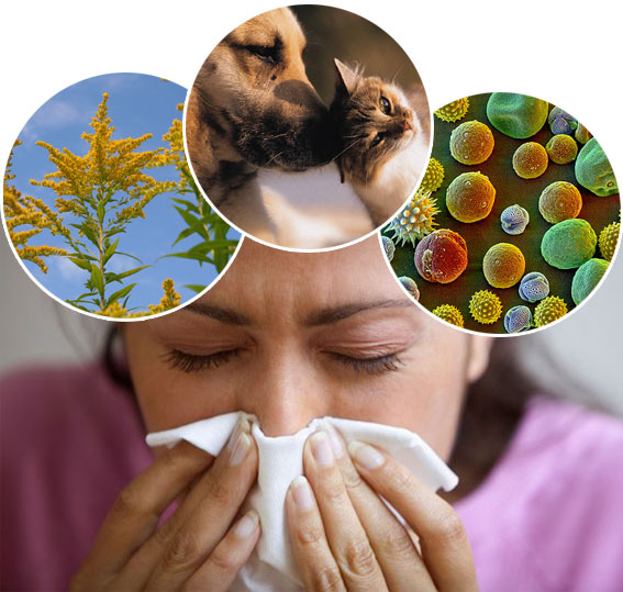 Image result for allergies images