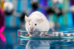 lab mice ideal subjects