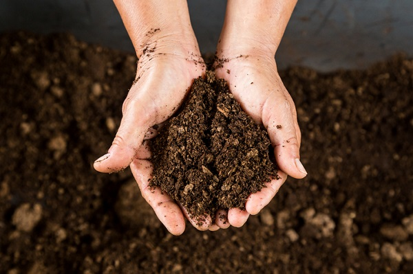 Soil type can affect the development of terpenes in plants