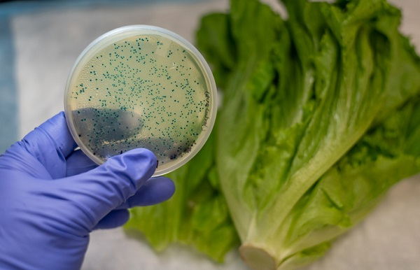 Students in food technology will learn about rapid detection of foodborne microorganisms