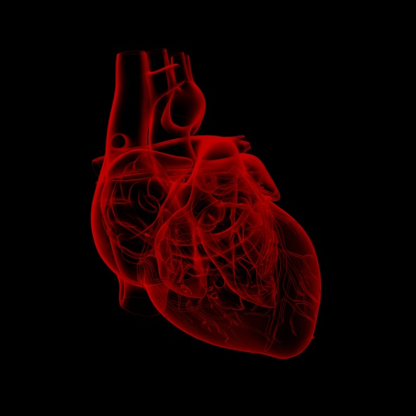Ouabain is currently used to treat heart conditions