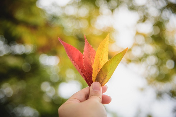Pigments extracted from leaves were used when chromatography was invented