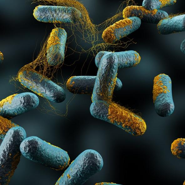 Clostridium Botulinum is the bacteria responsible for botulism