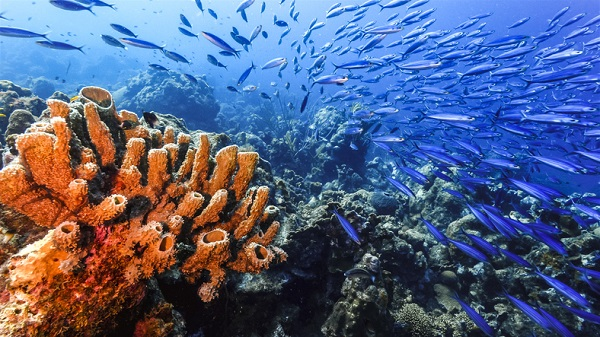 Eribulin, derived from sea sponges, has shown promise in extending life for those with TNBC