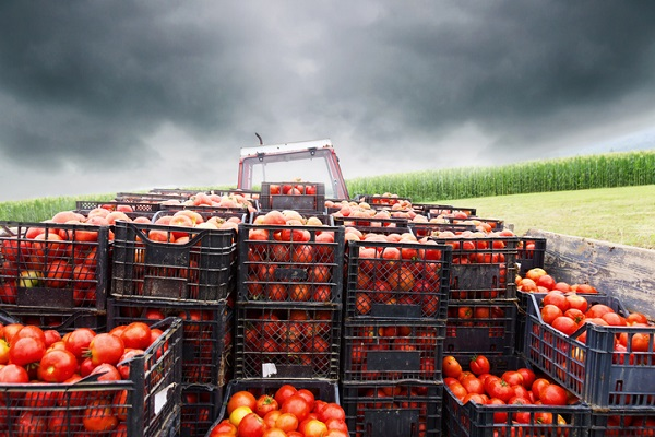 Recognize potential contamination risks from farm to fork